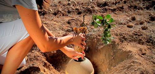 Idea de negocio: Funeraria ecológica