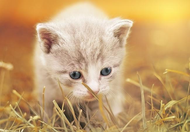 video gatos